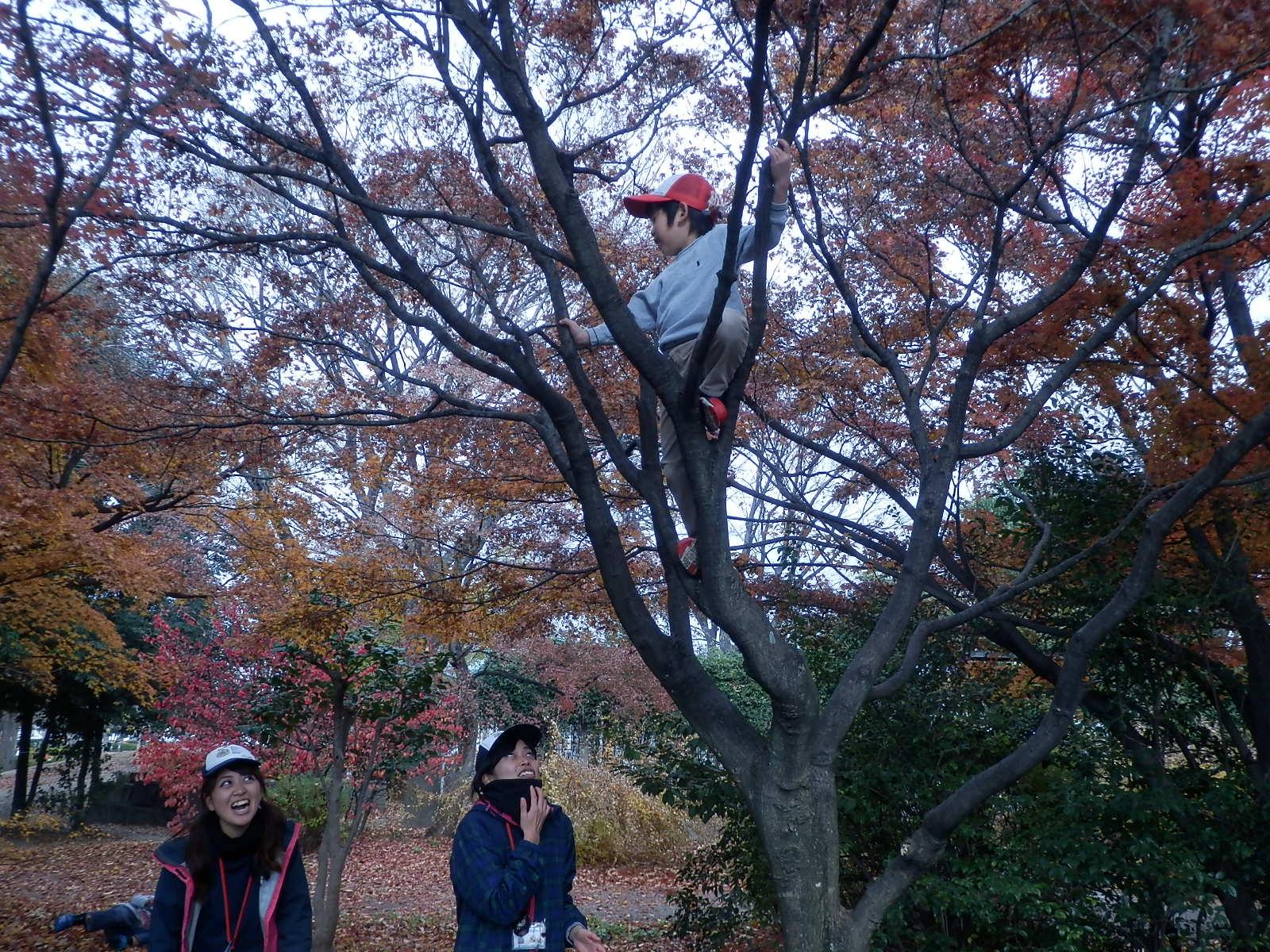 に 登る へん 木